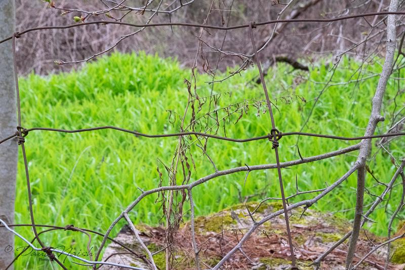 Glen Major Forest
