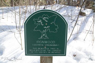 Drysdale Woods