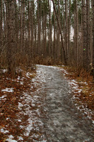 Uxbridge Trail (beside Rona) Dec 22/2020